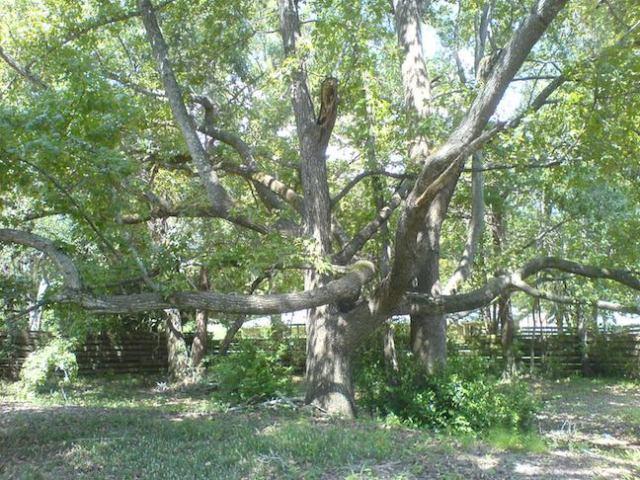 birdwell treehouse 3